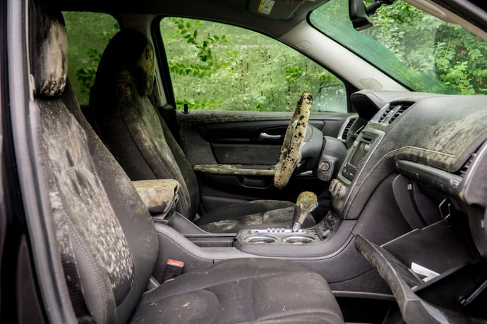 How to get Rid of Car Mould